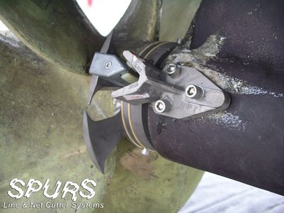 spurs-1